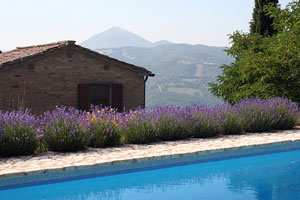 mountainside inground pool with lavender